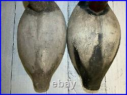 1940's Pacific Coast Canvasback Pair Vintage duck decoys by Leo Tocchini