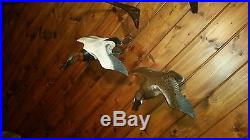 Carved flying canvasback duck pair, duck decoy, fish decoy, Casey Edwards