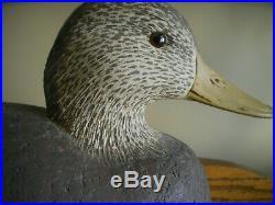 Cigar Daisey Cork Black Duck Full Size Decoy
