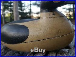 Harry V. Shourds Circa 1900 Goldeneye Drake Duck Hollow Decoy