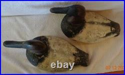 Pair Unknown Canvasback Duck Decoys
