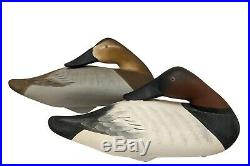 Sleeping Canvasback Pair Charlie Joiner