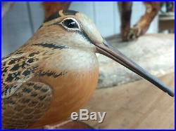 Woodcock Eddie wozny Duck Decoys Fabulous bird decoy